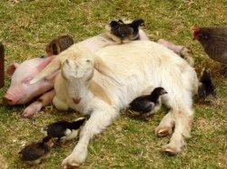 Четыре страны получили высший бал в рейтинге благосостояния животных