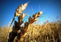Минсельхоз: продовольственная безопасность России обеспечена