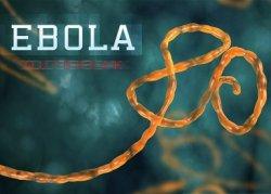 Российские ученые создали вакцину против лихорадки Эбола