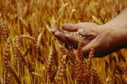 ФАО: Добыча сырья должна стать более стабильной