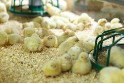 Продуктовое эмбарго не помогло российским аграриям