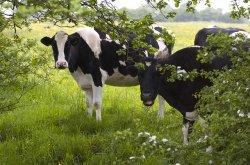 Медведев откорректировал предоставление субсидий на животноводство