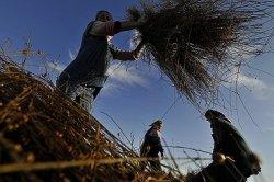 Фермеры назвали главные препятствия в работе