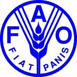 Представительство ФАО откроется в Москве