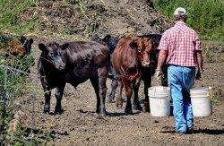 Фермеры США лишились трети доходов