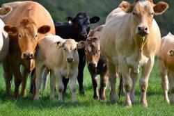 АККОР:«Основной поток господдержки достается крупным агрохолдингам, а не фермерам»
