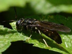 Опубликована питательная ценность муки из насекомых