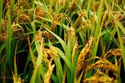 3-х фазный процесс производит одновременно биотопливо и корм для животных