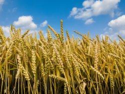 Обзор конъюнктуры аграрного рынка на 03.02.2015