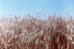 Украинские аграрии оказались на грани выживания