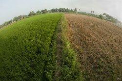 Пермские ученые создали «щит» для спасения растений от засухи