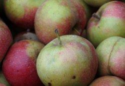 Россельхознадзор обнаружил в продаже запрещенные польские яблоки