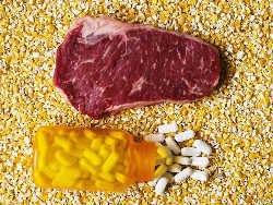 В США увеличилось ипользование антибиотиков в животноводстве