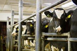В Евросоюзе отменяются квоты на производство молока и молочных продуктов