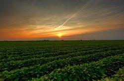 Австрийцы будут выращить сою без ГМО в Молдавии