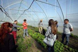 Сербские аграрии обучаются органическому фермерству в Венгрии