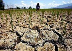Фермеры и трейдеры оценили последствия активизировавшегося Эль-Ниньо