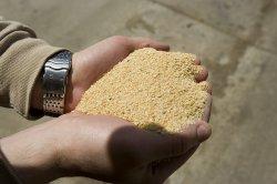 Цена соевого шрота на кормовом рынке Европы падает