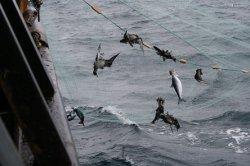 Госдума приняла закон о запрете дрифтерного вылова рыбы