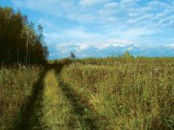 В России заброшено около 45 млн га пахотных земель
