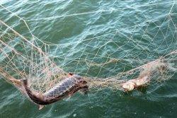 Рыбаки попросили запретить промышленный лов на Волге