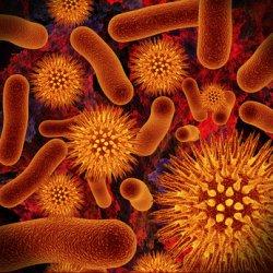 Бактерии можно сделать уязвимыми к антибиотикам