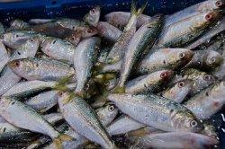 Россия сняла запрет на импорт рыбы с 23 предприятий Японии