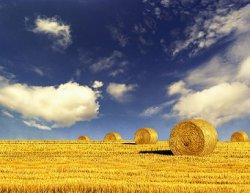 Американские компании контролируют до 20% плодородных земель Украины