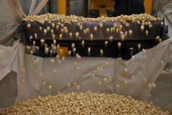 Как влияют низкие цены на зерно на кормовую формулу?
