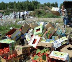 Мнение:Почему уничтожение санкционных продуктов не повредит имиджу власти