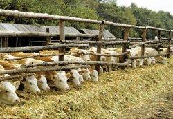 Эксперты: «Частные хозяйства не могут обеспечивать безопасность мяса»