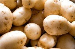 Уральские ученые вывели три сорта картофеля для механической уборки урожая