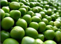 Новый сорт гороха увеличивает белок в кормах