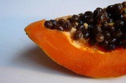 Россельхознадзор изучает происхождение «белорусской папайи»