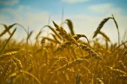 Эксперты: «Аграрии не могут отыскать выгодных условий для бизнеса и заполнить рынок продуктами»