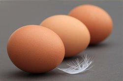Влияние глобализации на яйцеперерабатывающую промышленность