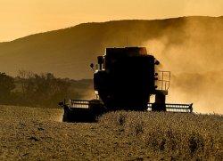 Ткачев: урожай зерна по уточненным данным составил 101 млн тонн