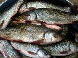 Почему в России рыба дороже мяса?